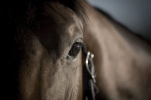 thoroughbred_industry_legal_services